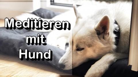 So wird dein Hund ruhiger – Meditieren mit Hund