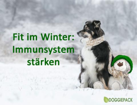Fit in den Winter: Tipps für ein starkes Immunsystem
