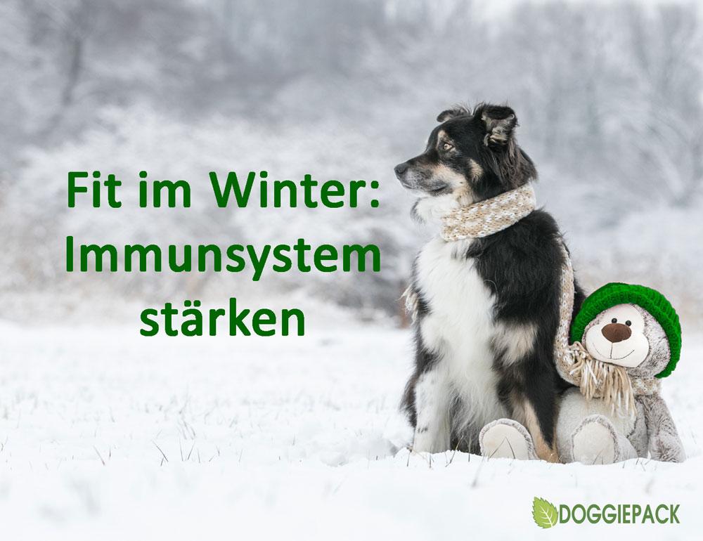 immunsystem_staerken_doggiepack_tipps
