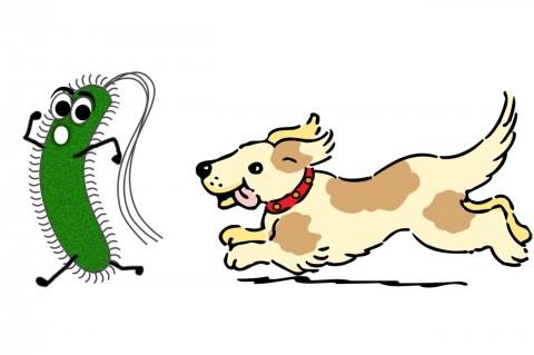 Impfen beim Hund – 10 häufig gestellte Fragen
