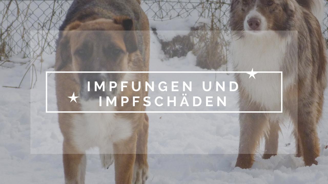 Impfungen bei Hunden und Imüfschäden