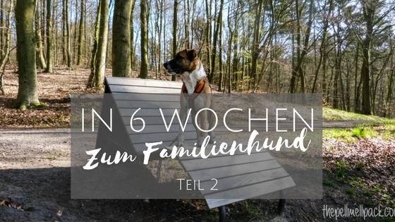 in-6-wochen-zum-familienhund-teil-2_titel