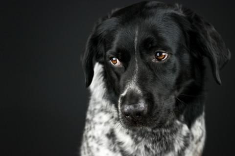 5 Tipps, wie du anderen Hundehaltern so richtig auf die Nerven gehst (mit Gelinggarantie!)