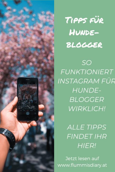 Instagram-Tipps für Hundeblogger