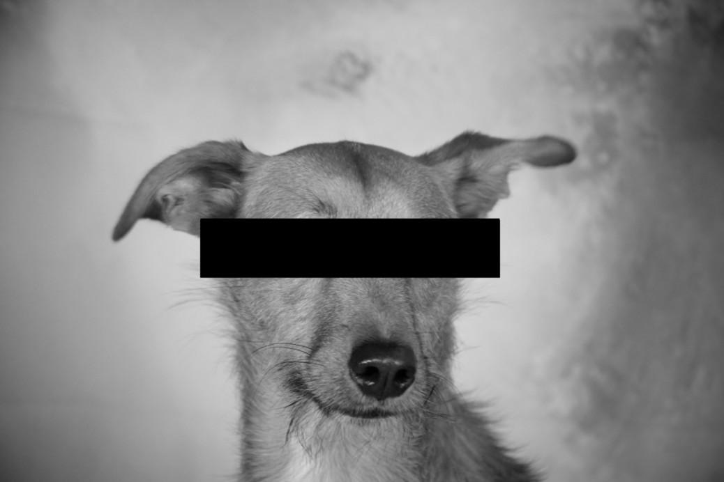 Hundeblogger Kooperationen