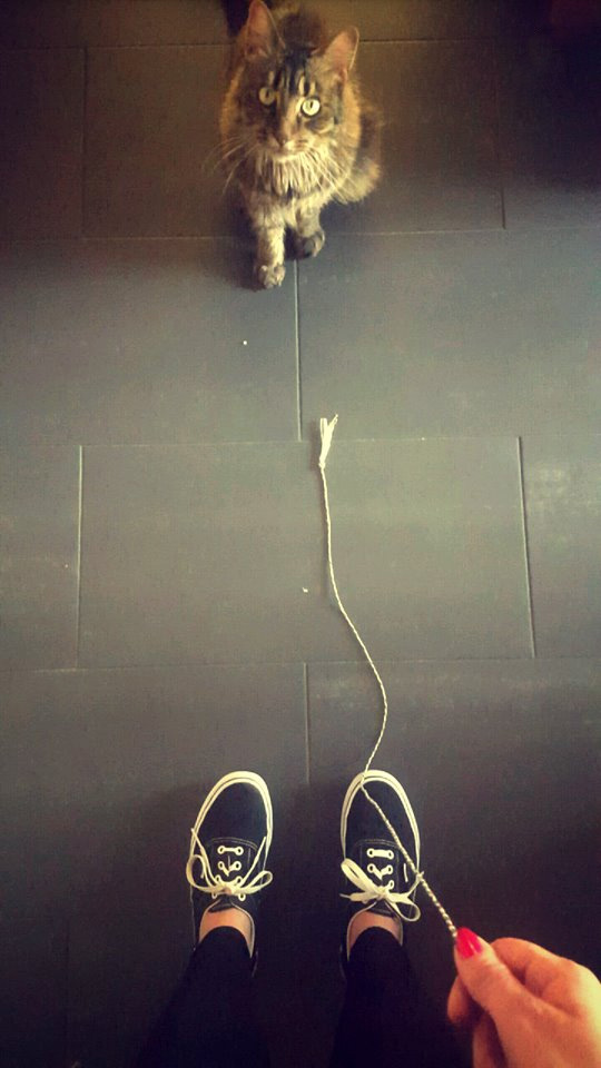DIY Hundespielzeug