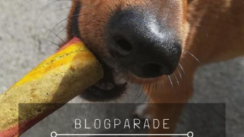 Zeigt her Eure nachhaltigen Hundekekse! – Eine vorweihnachtliche Keksparade.