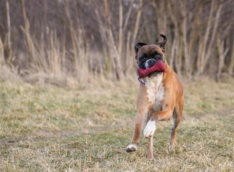 """[Produkttest] Frauchen muss in die """"Hundeschule"""" – Stiftung Pfotentest testet den Onlinekurs """"meinHund"""" der MiDoggy Academy"""