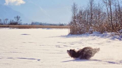 Kleiner Ratgeber Wintersport mit Hund – Teil 1: Die Vorbereitung