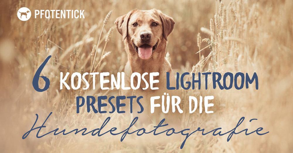 kostenlose-lightroom-presets-hundefotogografie