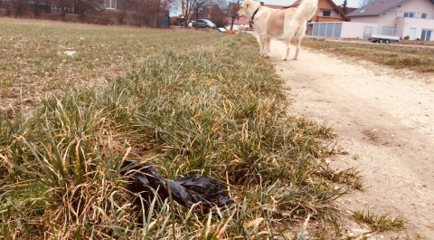 Green Dog Hundehaltung #3: Kotbeutel