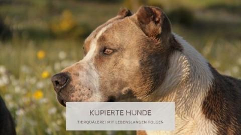 Hunde kupieren – Tierquälerei mit lebenslangen Folgen