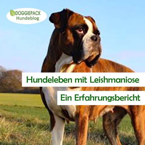 Hundeleben mit Leishmaniose – ein Erfahrungsbericht
