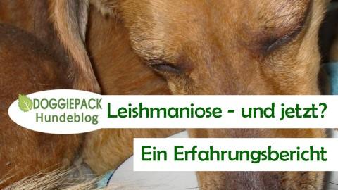 Leishmaniose – Uli & Tim erzählen von ihren Erfahrungen