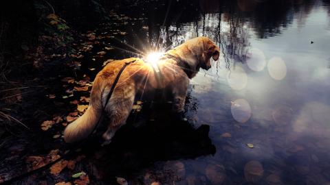 """Wie leuchtet der Hund im Dunkeln """"nachhaltig""""?"""