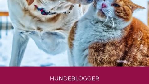 "Blogparade: ""Liebe dein Haustier""-Tag"