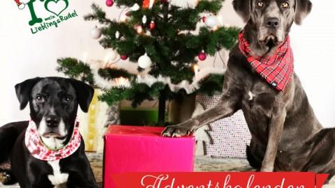 Unser Adventskalender 2019 wartet mit tollen Preisen für dich und deinen Hund