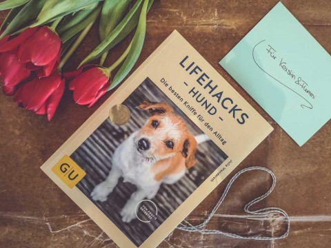 Lesetipp: Lifehacks für Hundebesitzer