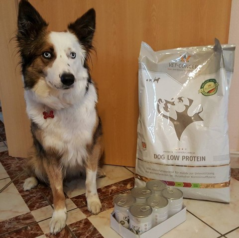 Vet-Concept: Dog Low Protein