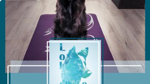 Hundetricks: So lernt euer Hund Männchen
