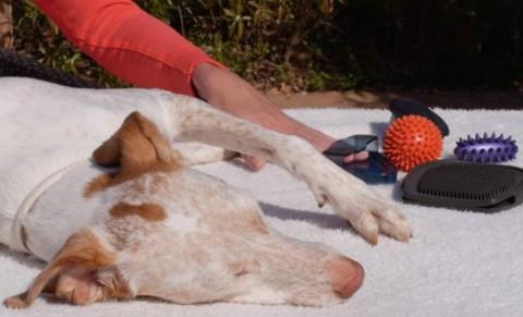 massage Hund mit hilfsmittel