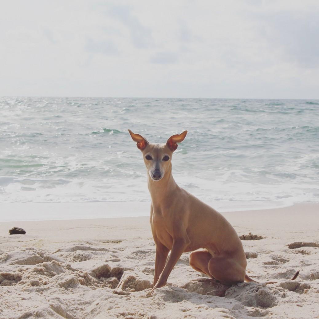 mein Hunde Urlaub