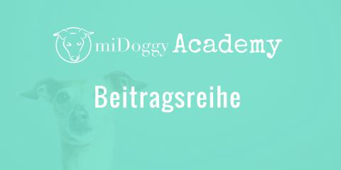 Die miDoggy Academy Beitragsreihe – auf einen Blick