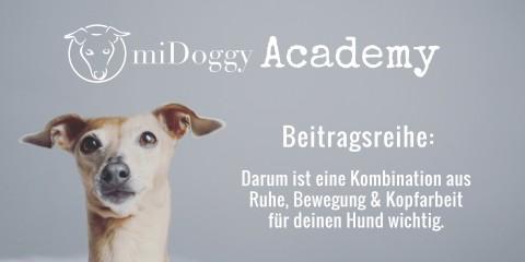 miDoggy Academy Beitragsreihe: Darum ist eine Kombination aus Ruhe, Bewegung und Kopfarbeit für deinen Hund wichtig