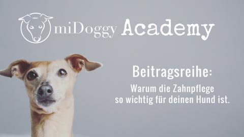 miDoggy Academy Beitragsreihe: Warum die Zahnpflege so wichtig für deinen Hund ist.