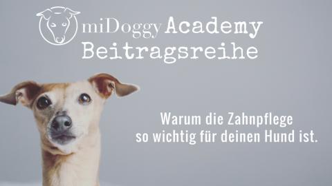 Geschützt: miDoggy Academy Beitragsreihe: Warum die Zahnpflege so wichtig für deinen Hund ist.