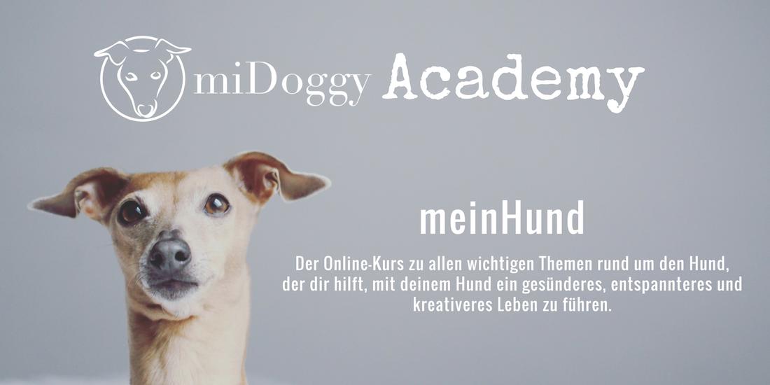 miDoggy Academy meinHund