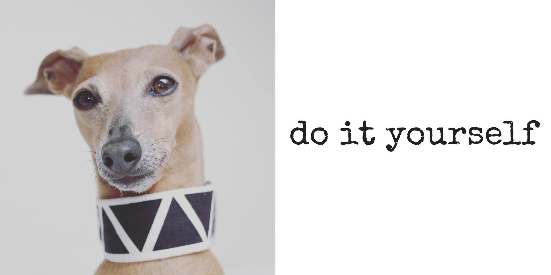 miDoggy Blog Community für Hunde DIY