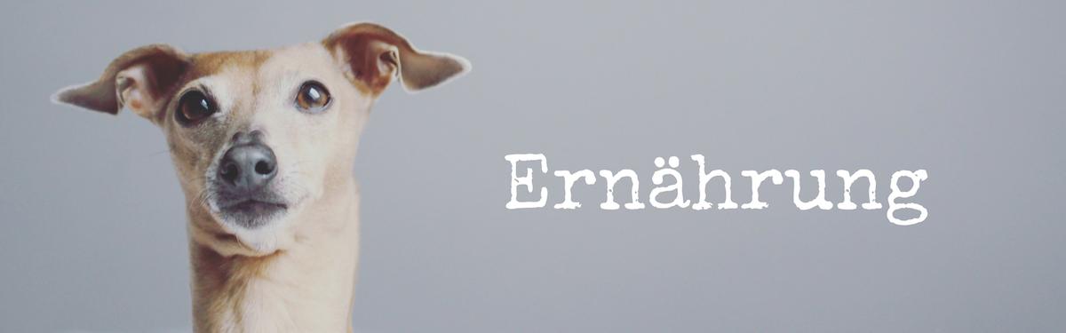 miDoggy Blog Community für Hunde Ernährung Hundefutter