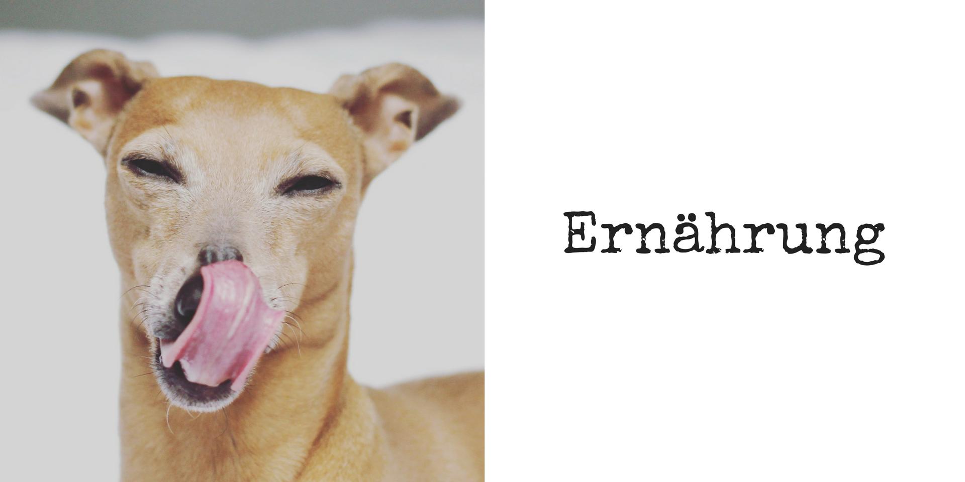 miDoggy Blog Community für Hunde Ernährung