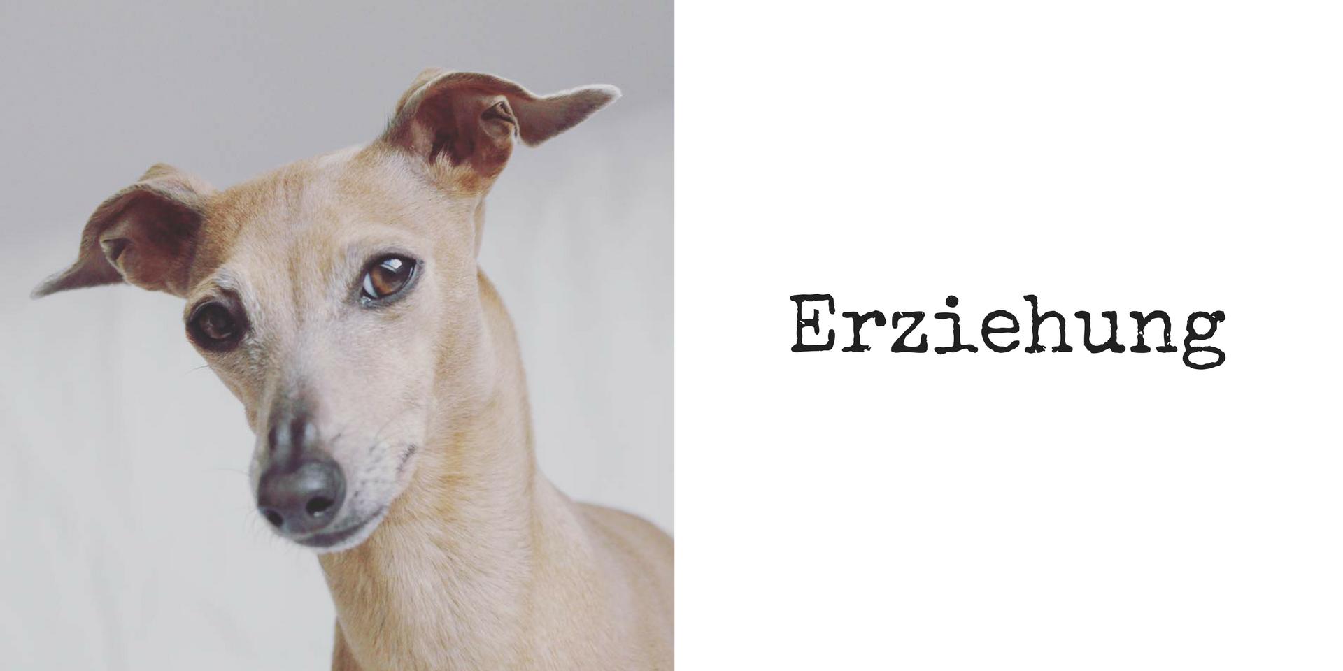 miDoggy Blog Community für Hunde Erziehung