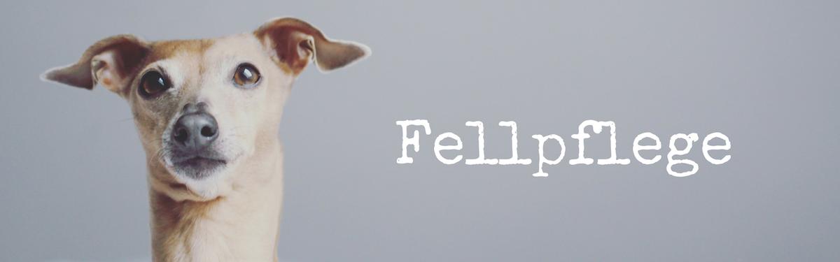 miDoggy Blog Community für Hunde Fellpflege Fell Pflege