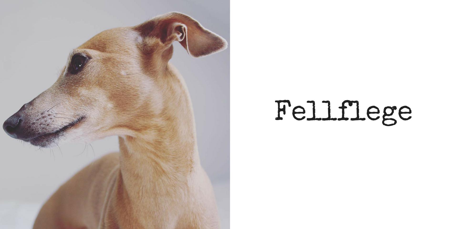 miDoggy Blog Community für Hunde Fellpflege Pflege