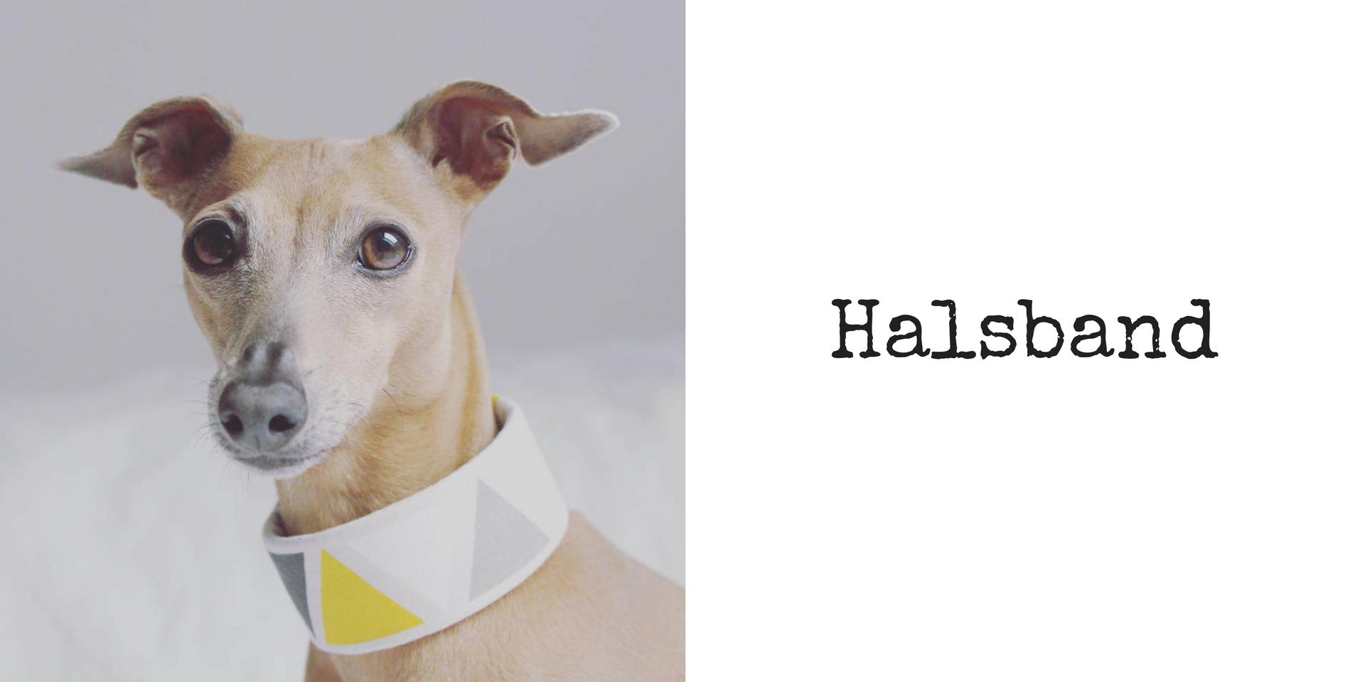 miDoggy Blog Community für Hunde Halsband