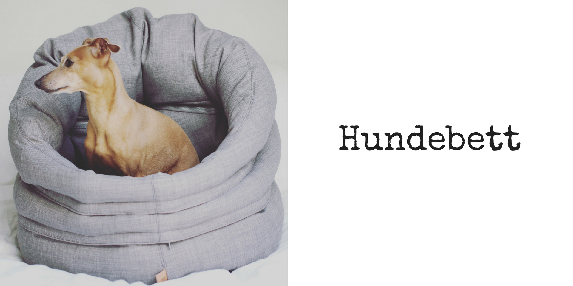 miDoggy Blog Community für Hunde Hundebett