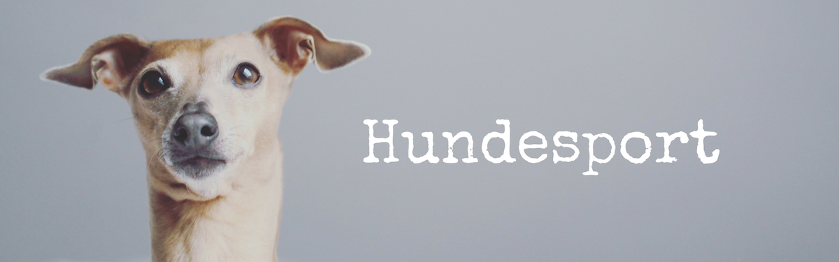 miDoggy Blog Community für Hunde Hundesport Sport