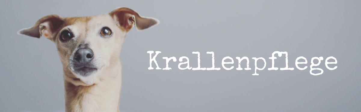 miDoggy Blog Community für Hunde Krallen schneiden Krallenpflege