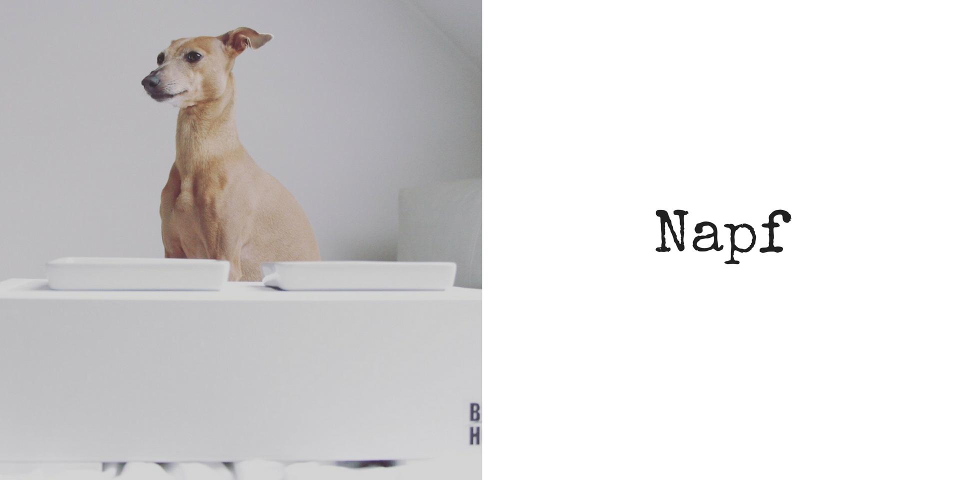miDoggy Blog Community für Hunde Napf