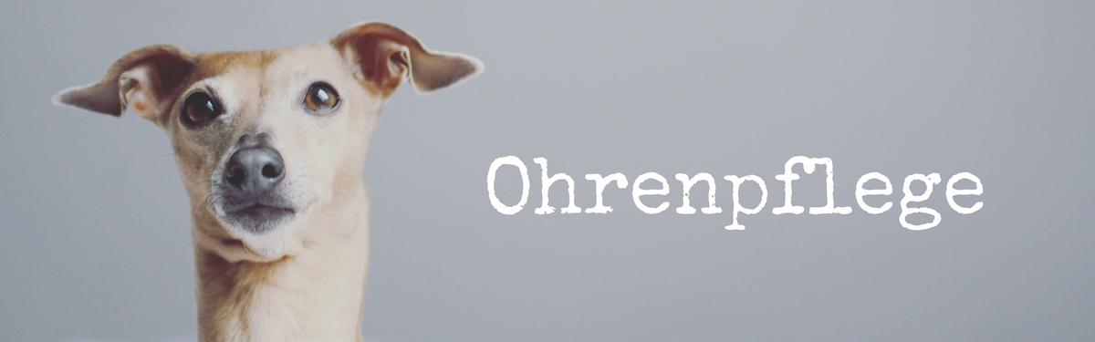 miDoggy Blog Community für Hunde Ohrenpflege