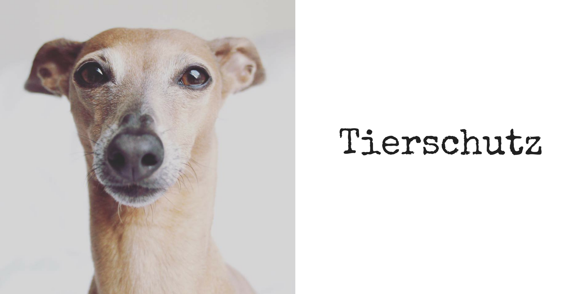 miDoggy Blog Community für Hunde Tierschutz