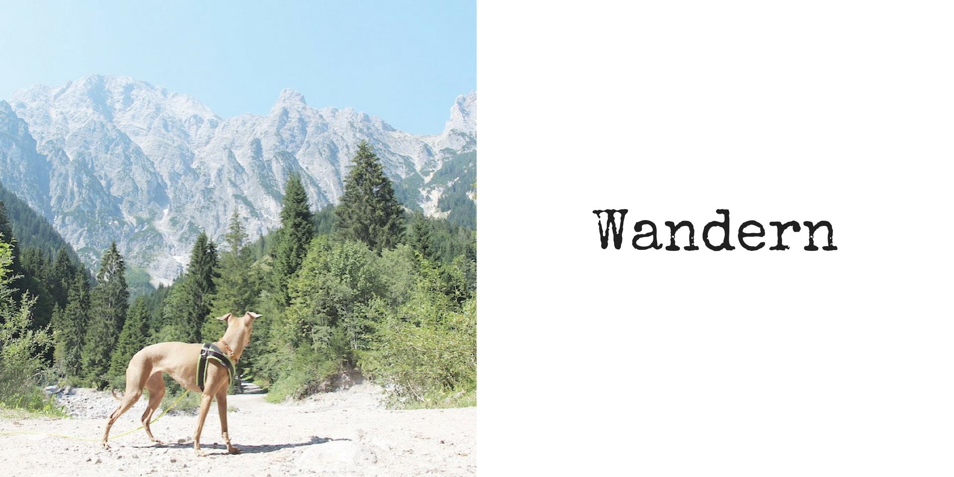 miDoggy Blog Community für Hunde Wandern