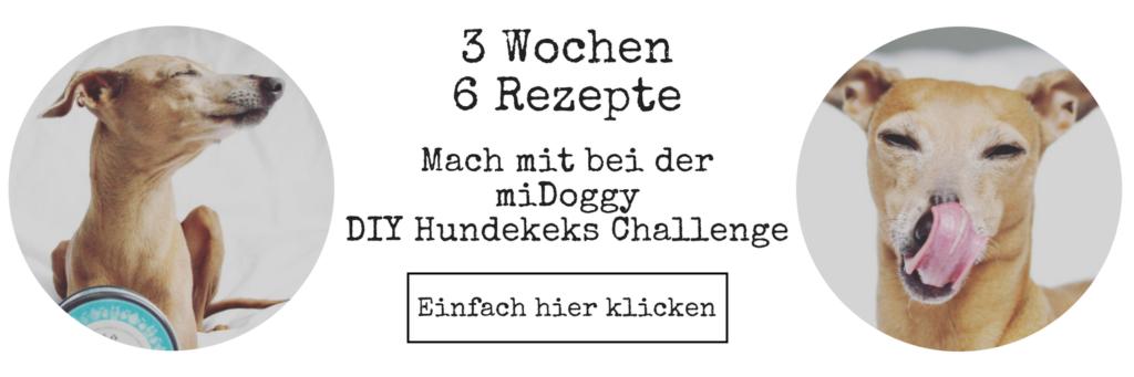 miDoggy DIY Hundekeks Challenge