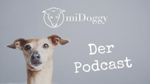 Der miDoggy Podcast für alle Hundebegeisterte || #4 mit Tina von Doggy Fitness