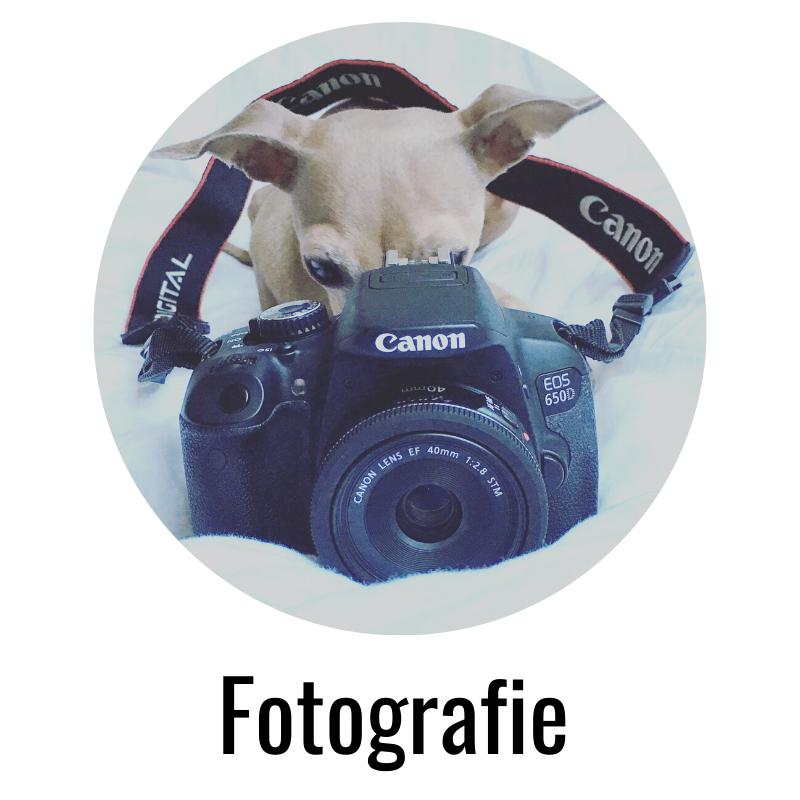 miDoggy Hund Fotografie