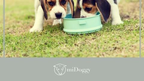Der Futternapf – welcher ist der Gesündeste für deinen Hund?