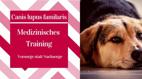 Medizinisches Training beim Hund | Vorsorge statt Nachsorge